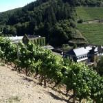 OSB viert haar 30 jarig bestaan met een wijnreis